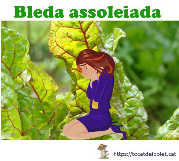 Bleda assoleiada Insults en català Insults il·lustrats en llengua catalana.