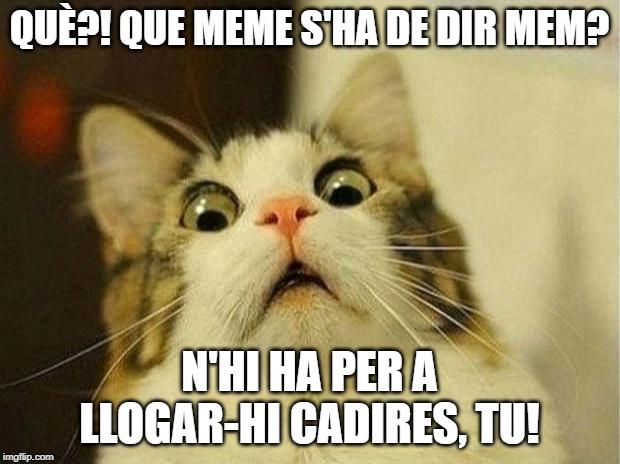 meme en català mem