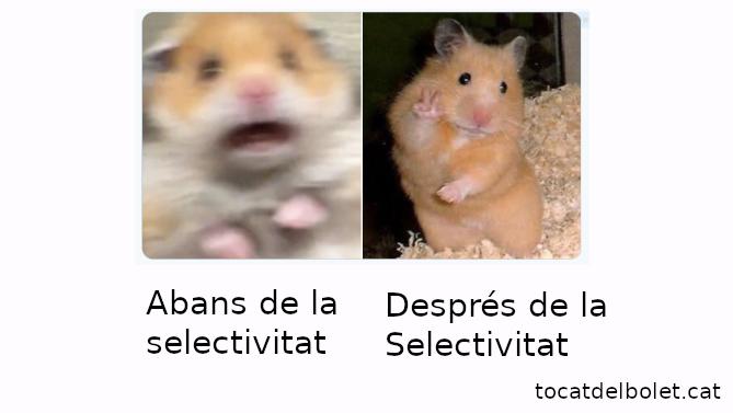 mem selectivitat acudit selectivitat  acudits