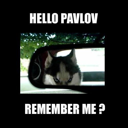 Pavlov meme mem psicologia Acudits psicologia mem psicologia humor psicològia psicològic, psicòlegs, psicòloga meme